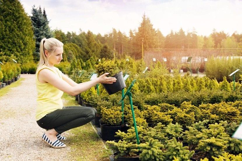 mujer que planta un arbol en recuerdo de su bebe no nacido