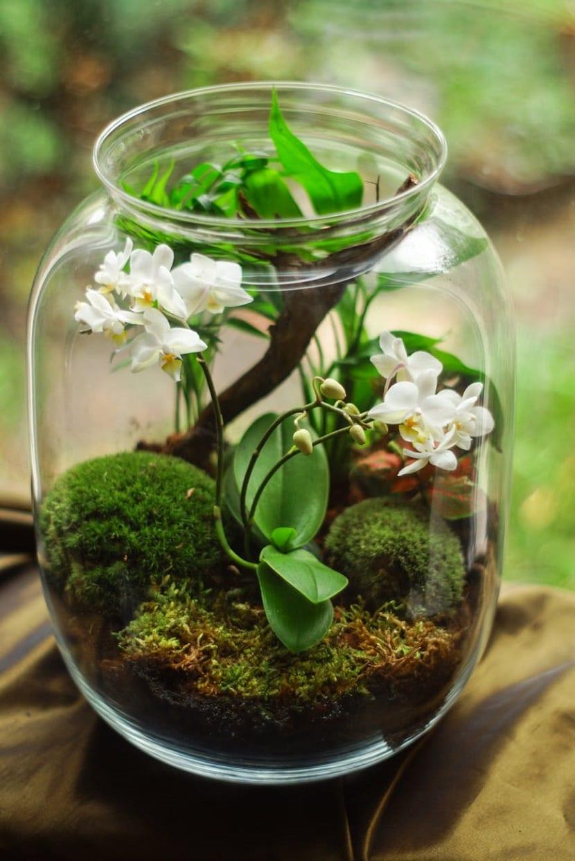 Plantas en botes de cristal