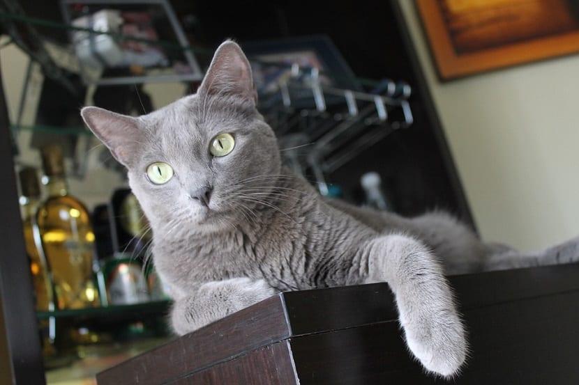 Razones por las que los gatos se deprimen