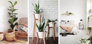 Plantas de interior fáciles