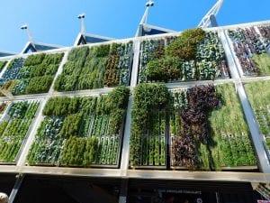 Consejos jardines verticales