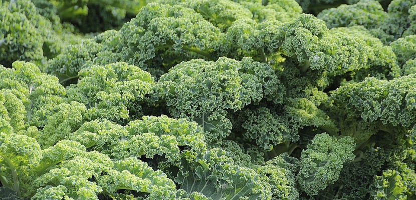 Kale propiedades