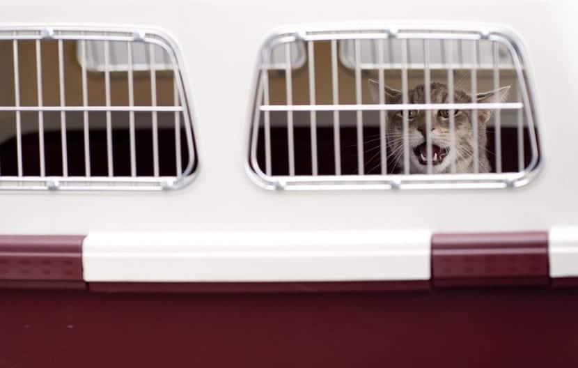 Requisitos viajar con animales