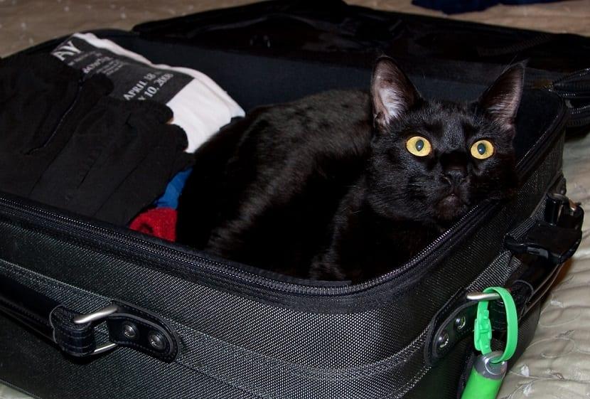 Vacunas para viajar con animales