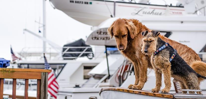 Viajar perros