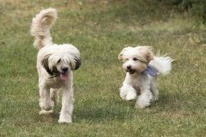 Manías y trastornos en perros