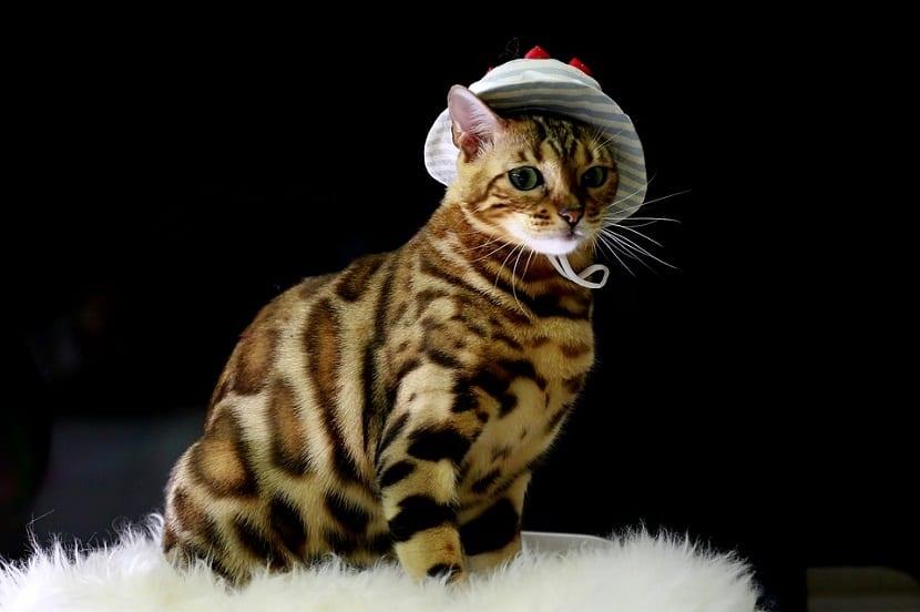 cosas que odian los gatos