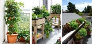 Cultivos balcón
