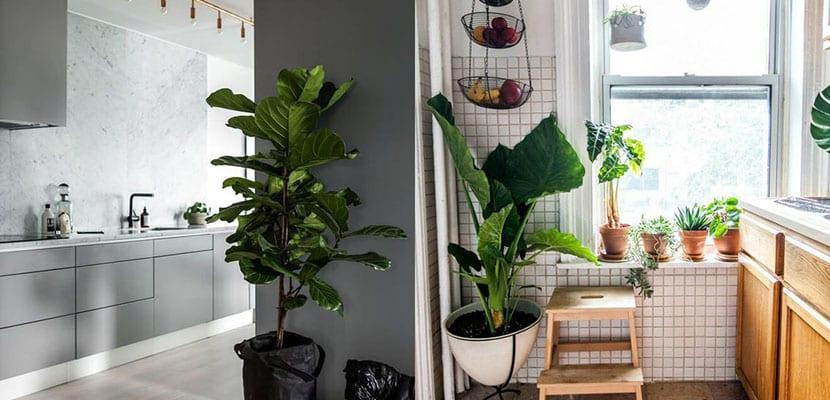 Cocinas con plantas
