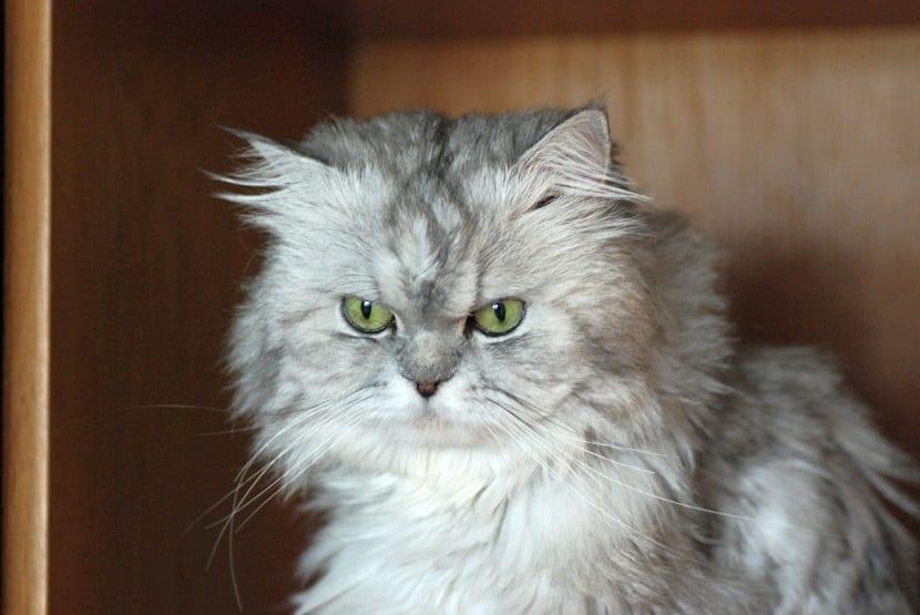 malestar de los gatos
