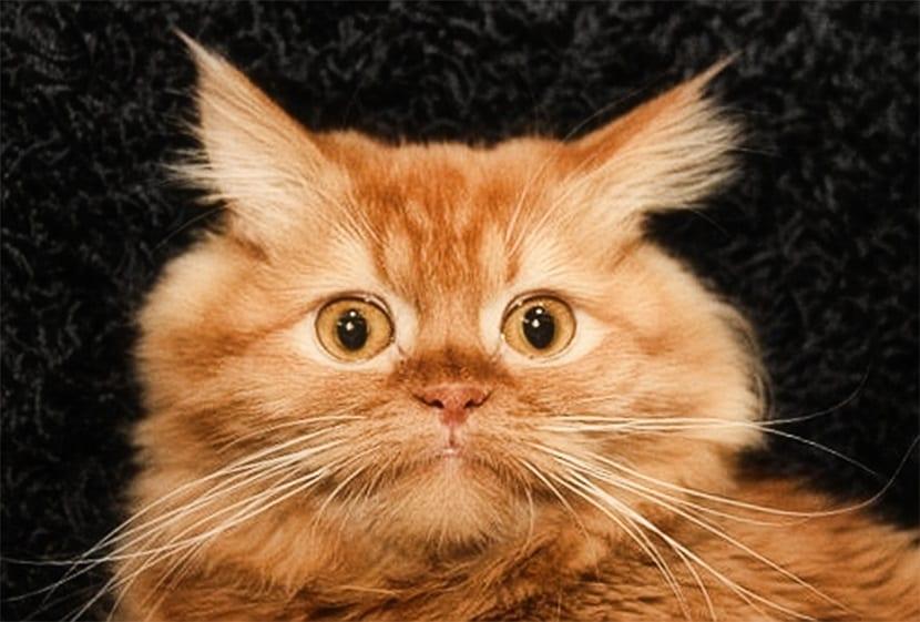 manias de los gatos