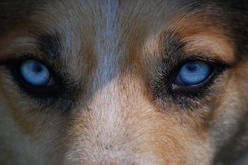 Mirar fijamente perro