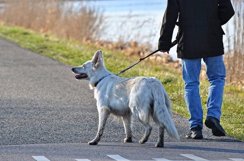 Pasear perro con correa