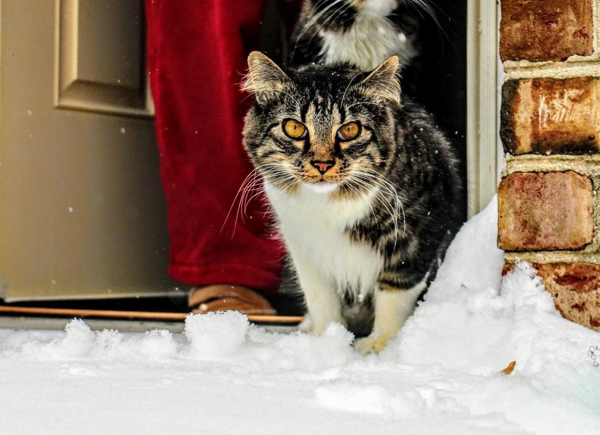 combatir el frio en animales