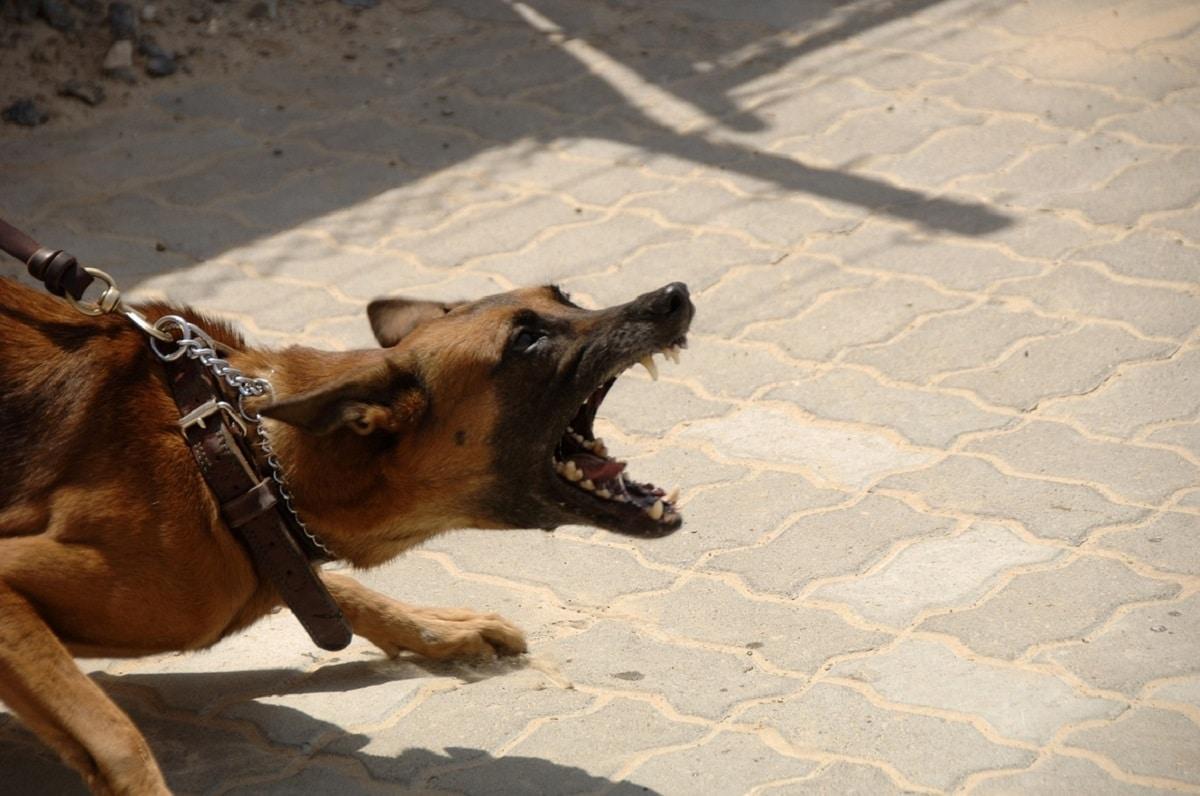causas enfado perros