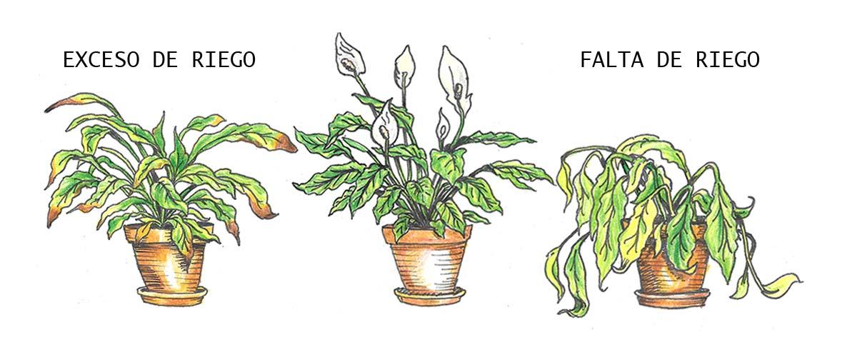 Riego en plantas