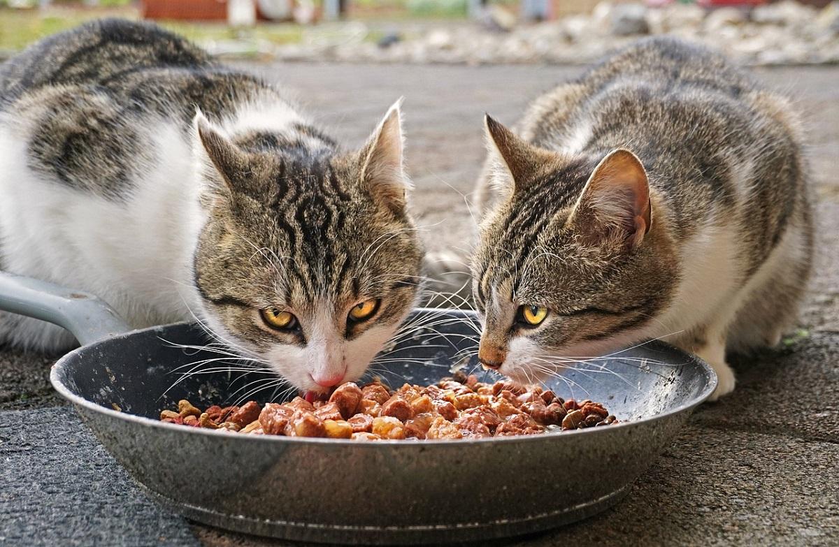 gatos comedero