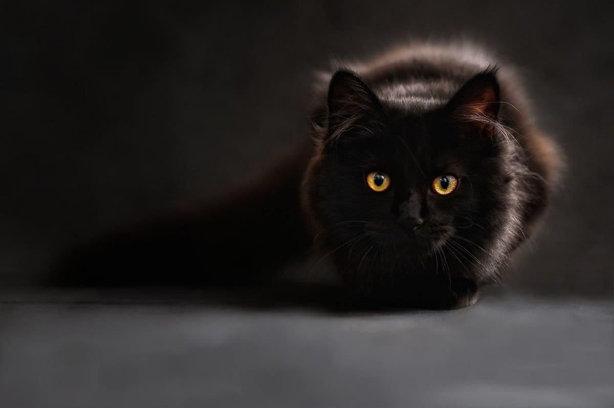 gatos perdidos