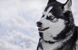 perro esta enfadado