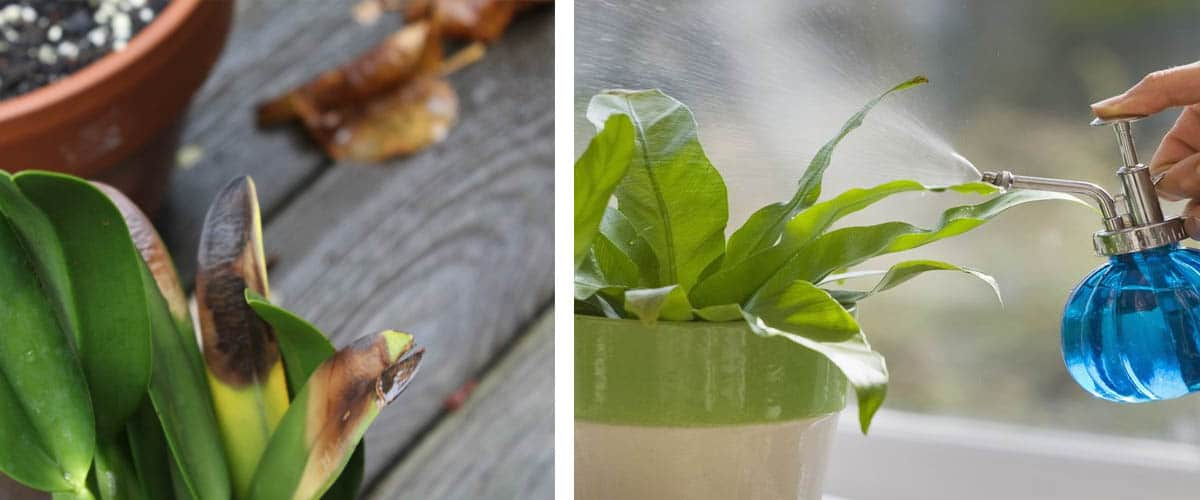 Síntomas en plantas