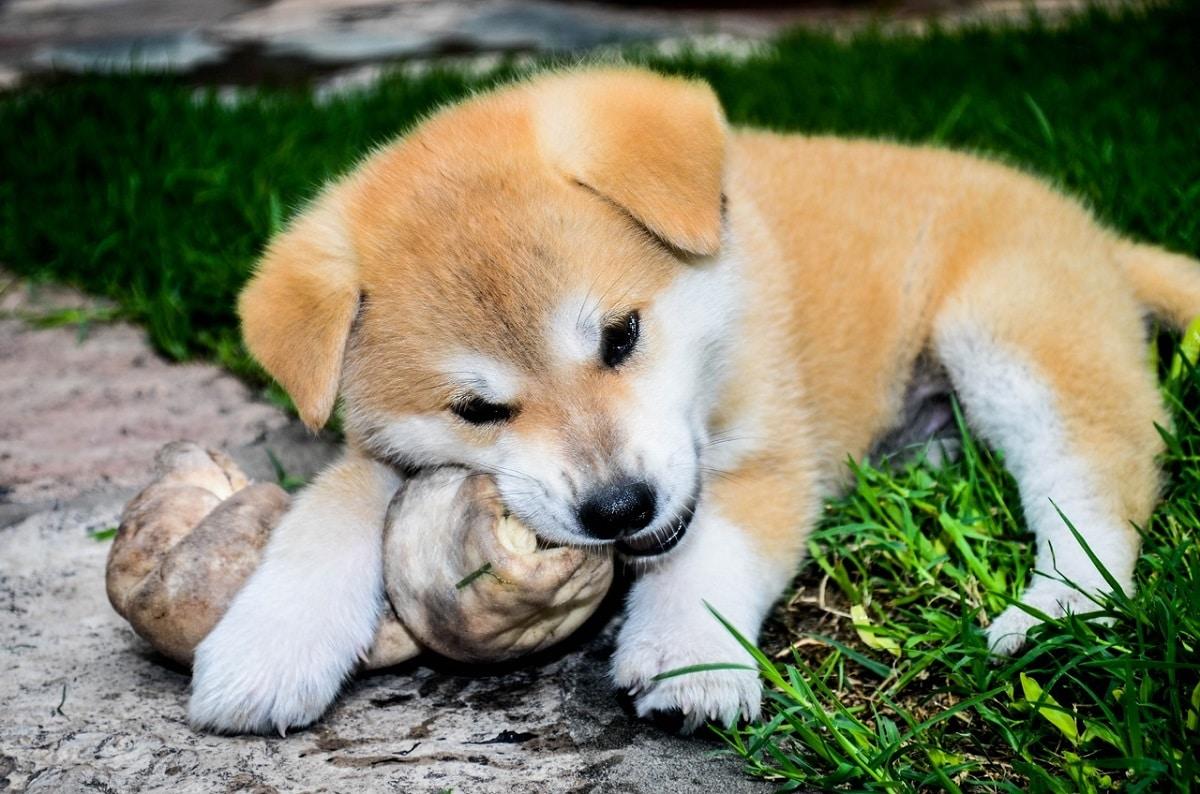 huesos perro