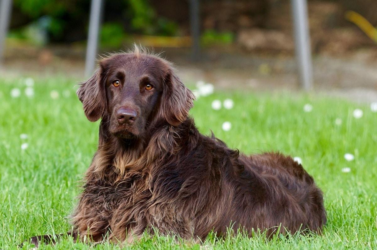 pelo del perro