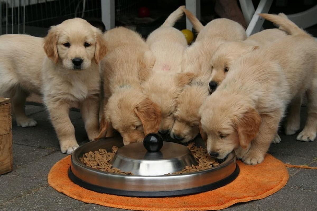 cosas necesarias para cachorros