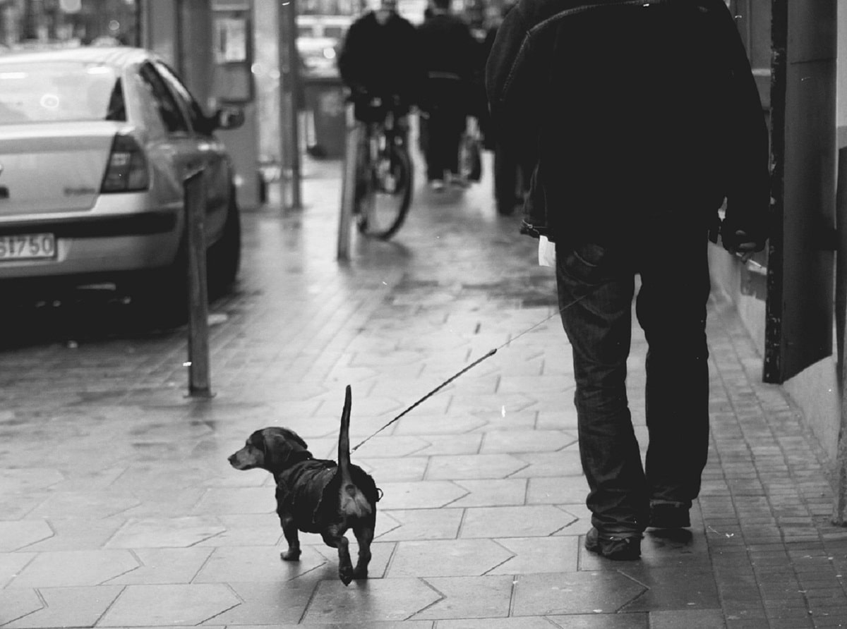 paseo con el perro en cuarentena