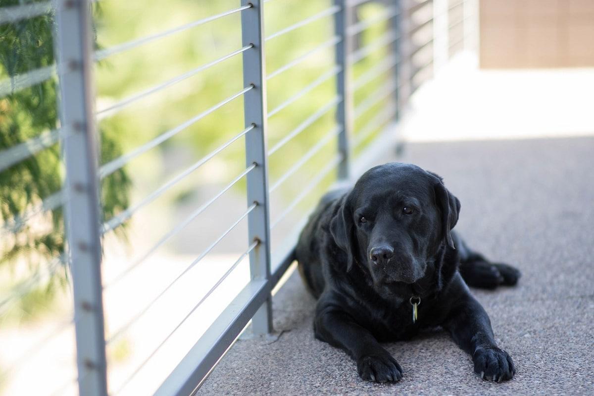 comportamiento perros confinados