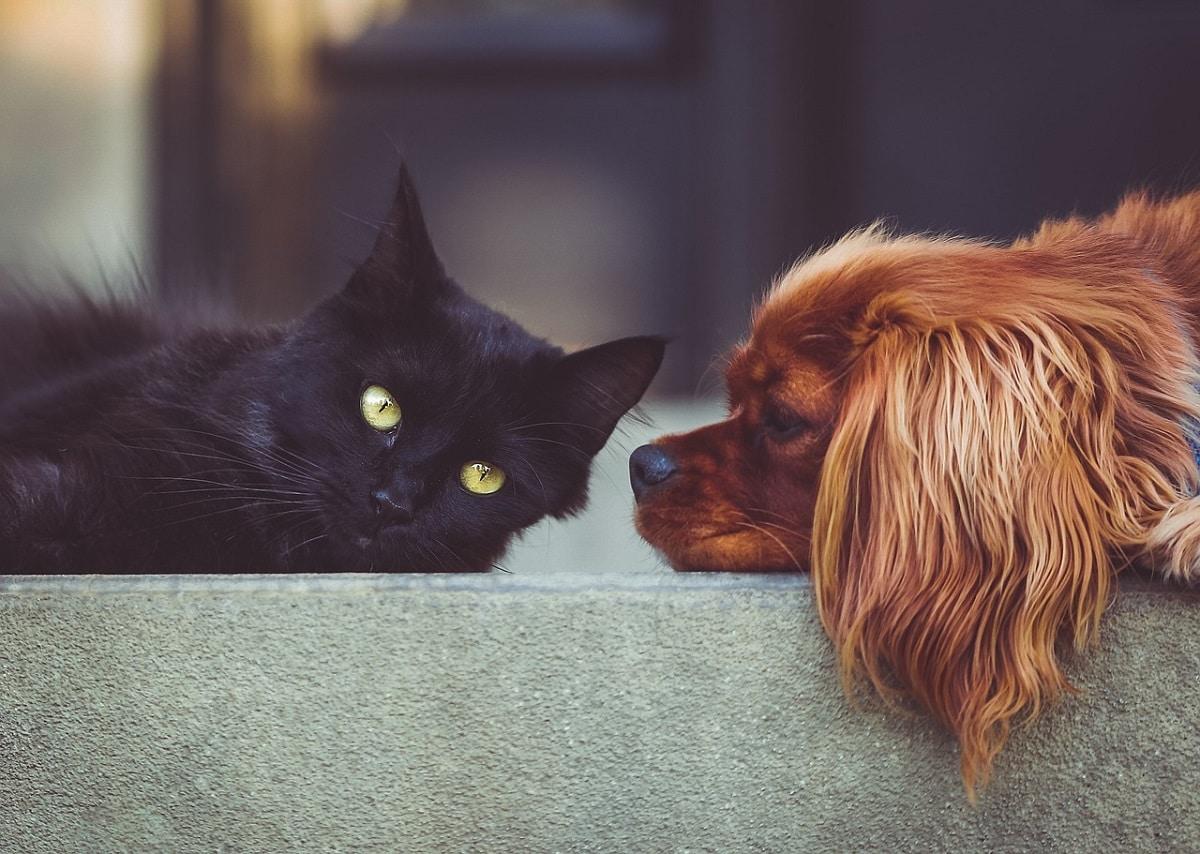 coronavirus mascotas