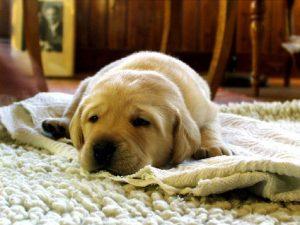 perros confinamiento