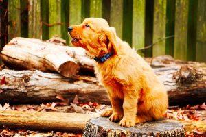 Cuando un perro aúlla