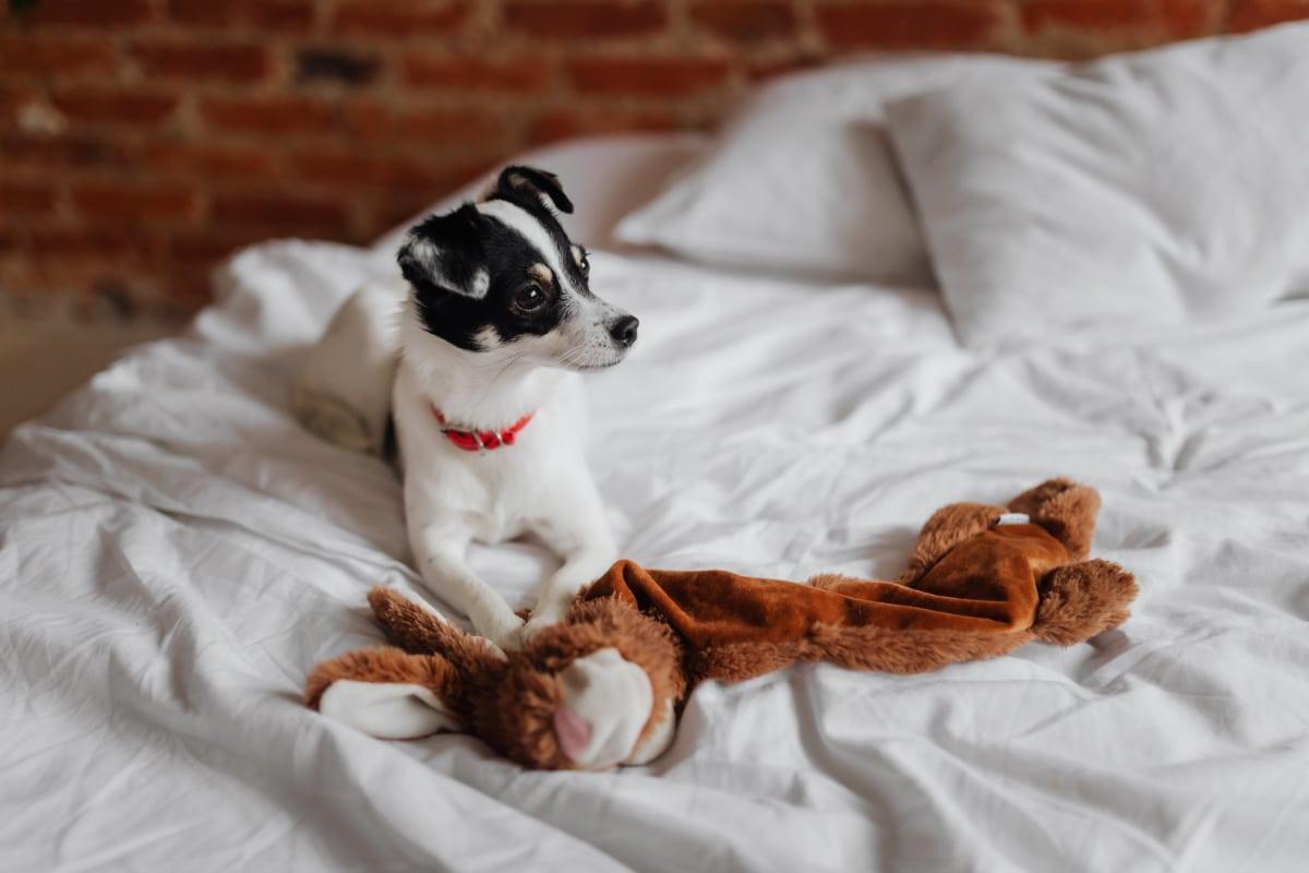 ventajas de dormir con mascotas