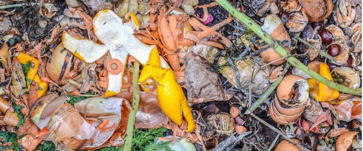 Desechos orgánicos
