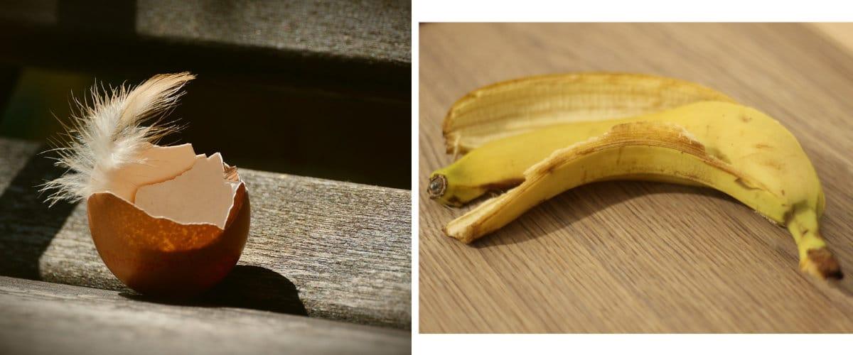 Cáscara de huevo y plátano