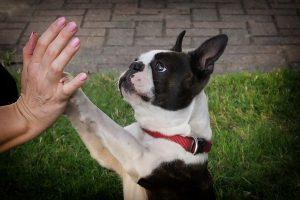 trucos para ensenar al perro