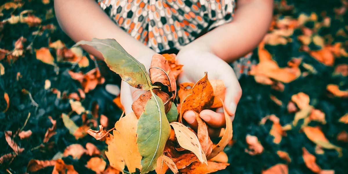 Defensas de otoño