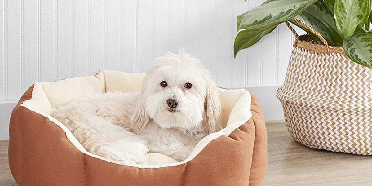 Camas ecológicas para perros