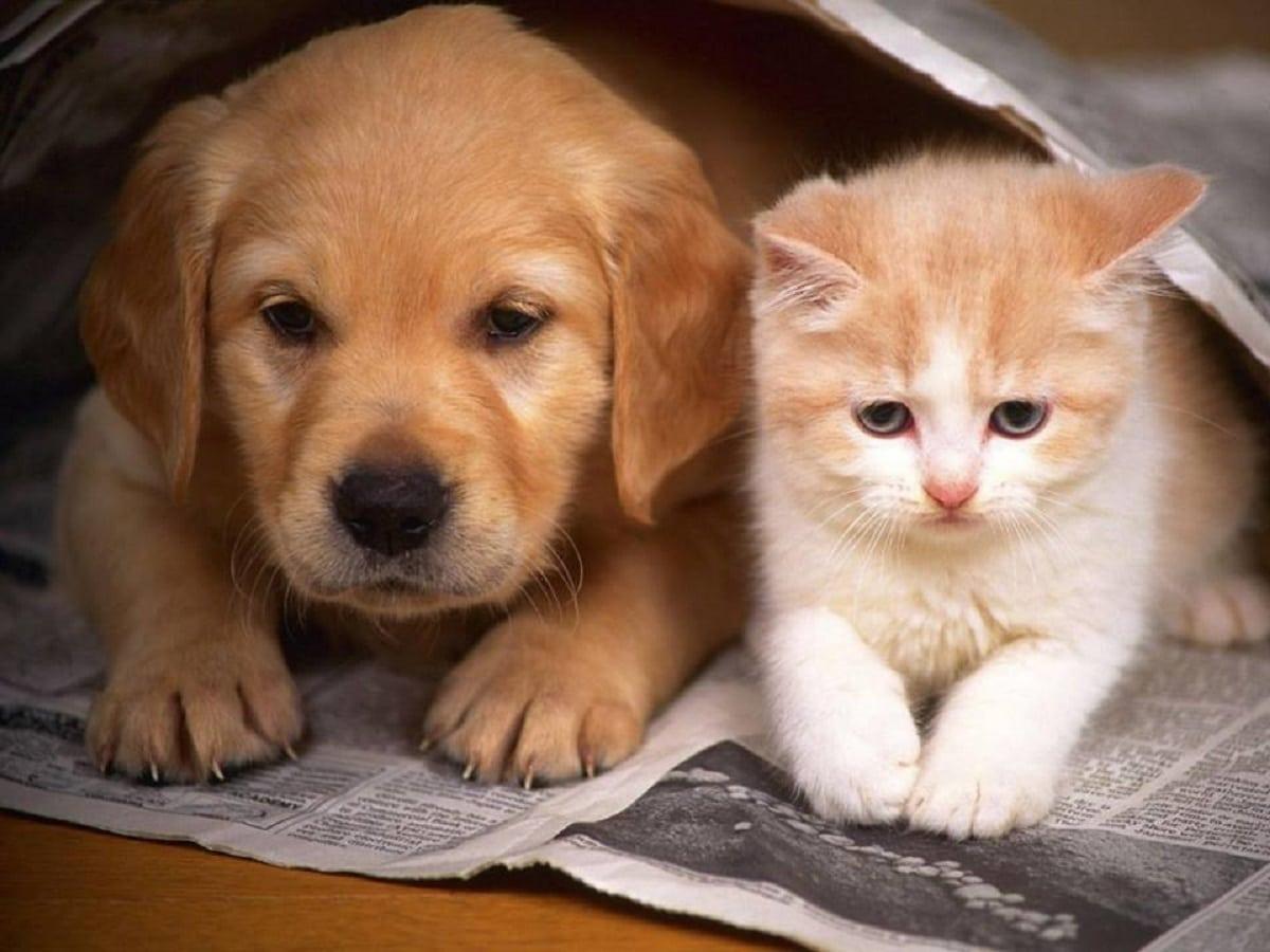 preguntas sobre mascotas