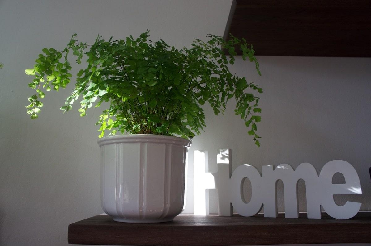 decorar casa con plantas