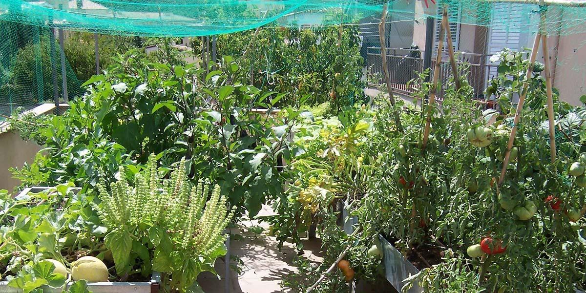 Cultiva en tu balcón