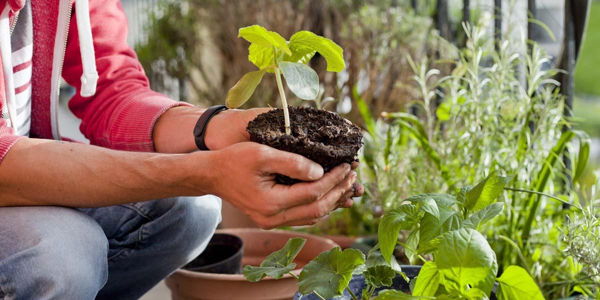 Cultiva el balcón