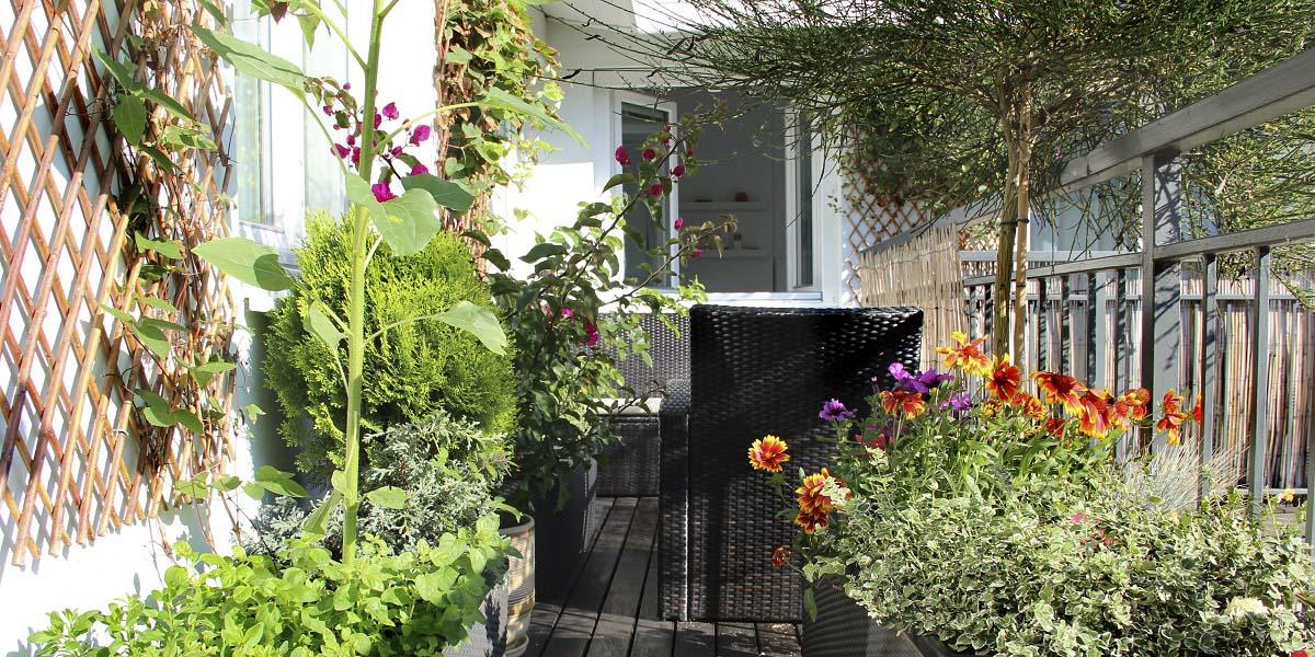 Cultiva en el balcón