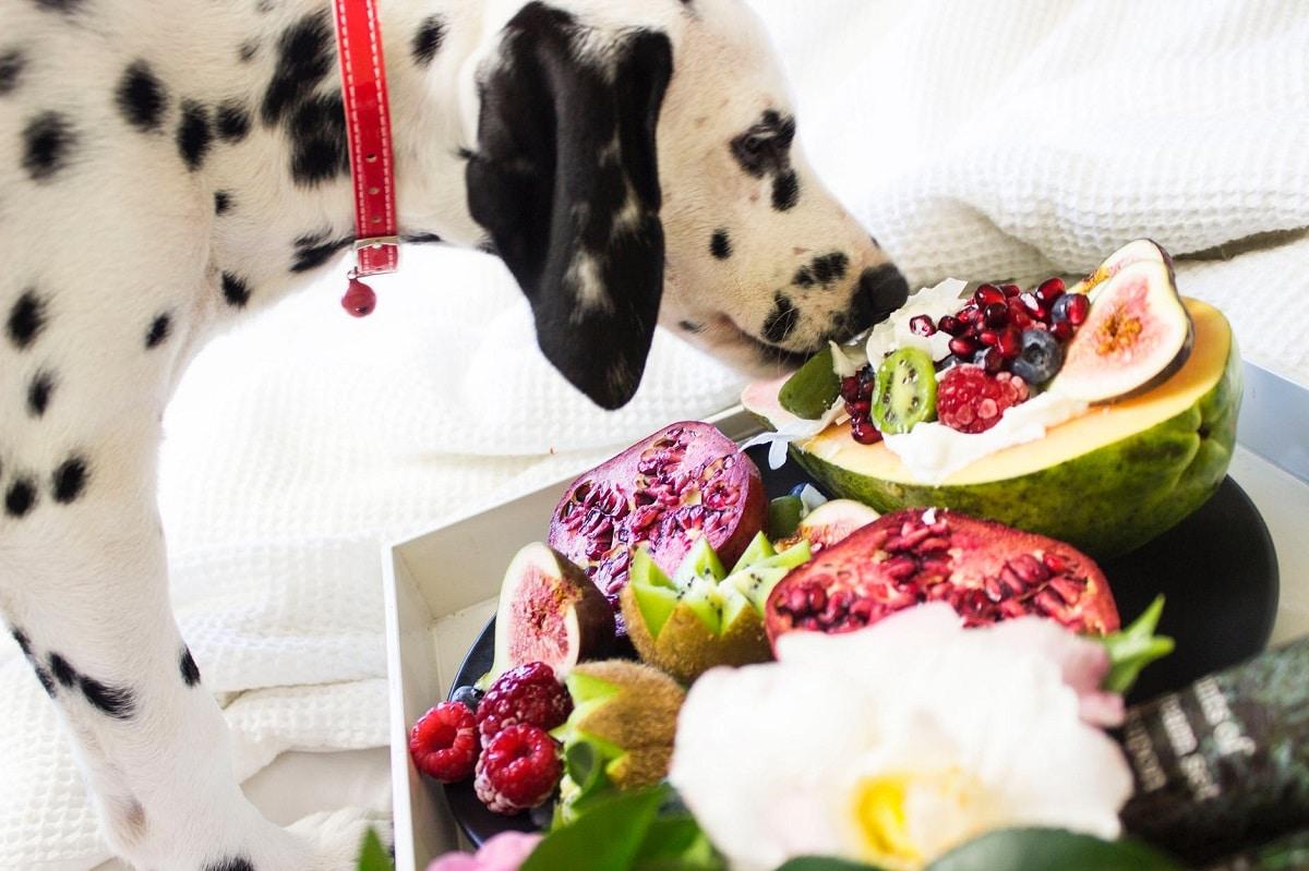 Dieta vegetariana para perros