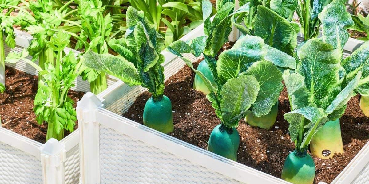 Jardín ecológico en el hogar