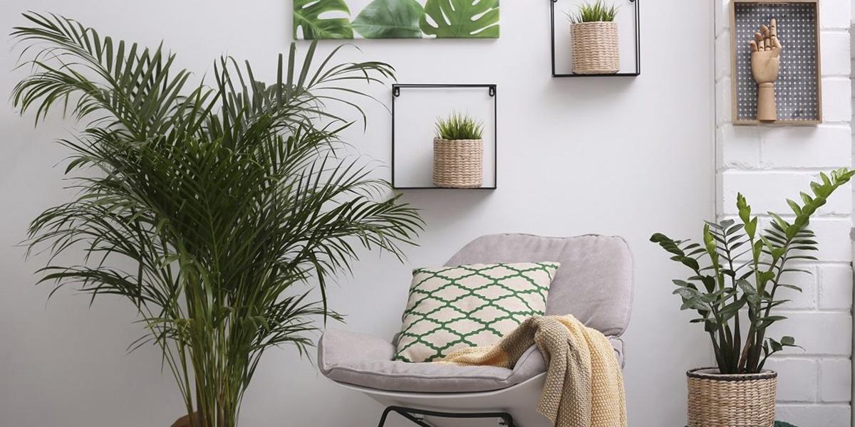 Plantas para decorar el interior