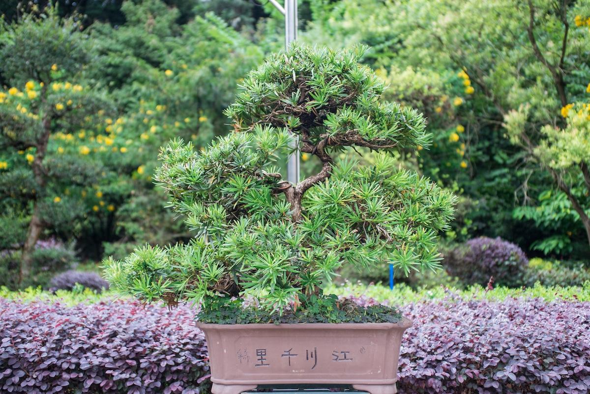 Los mejores bonsáis para tu jardín.
