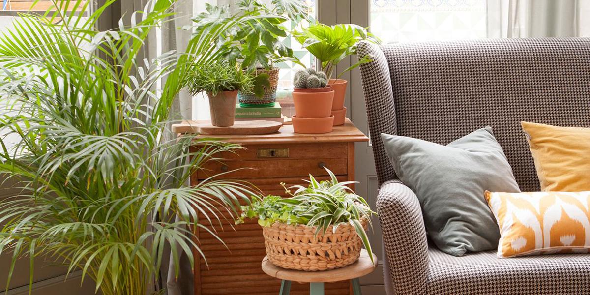 Decoración de plantas para el salón