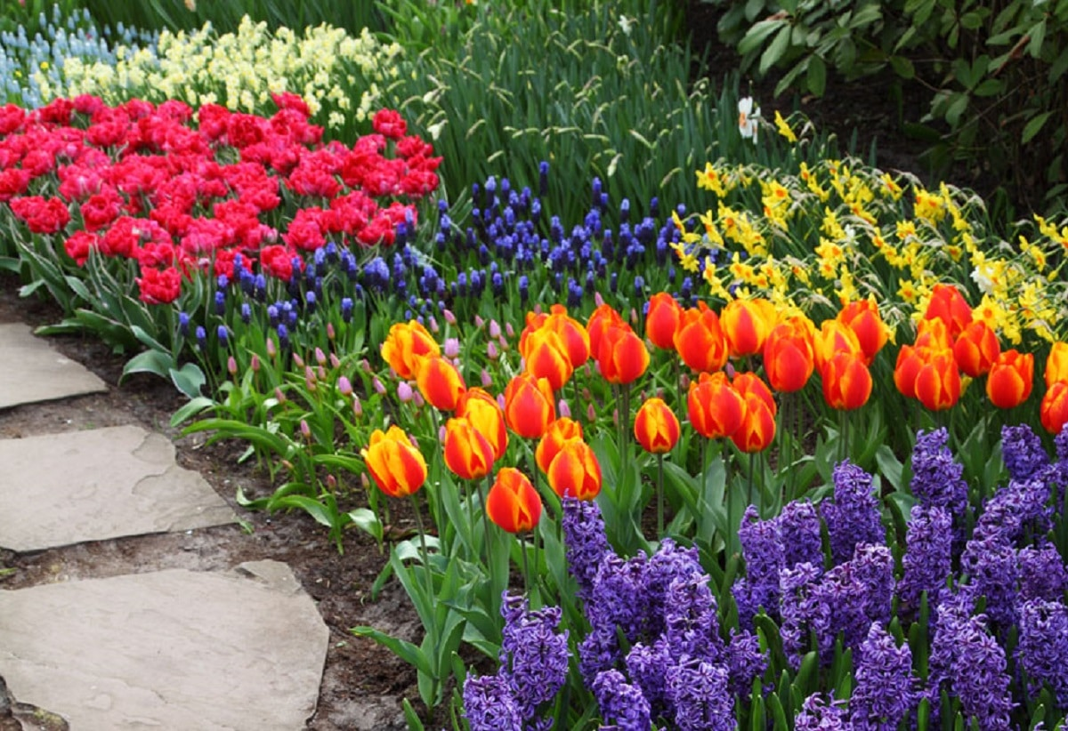 Flores para jardines pequeños