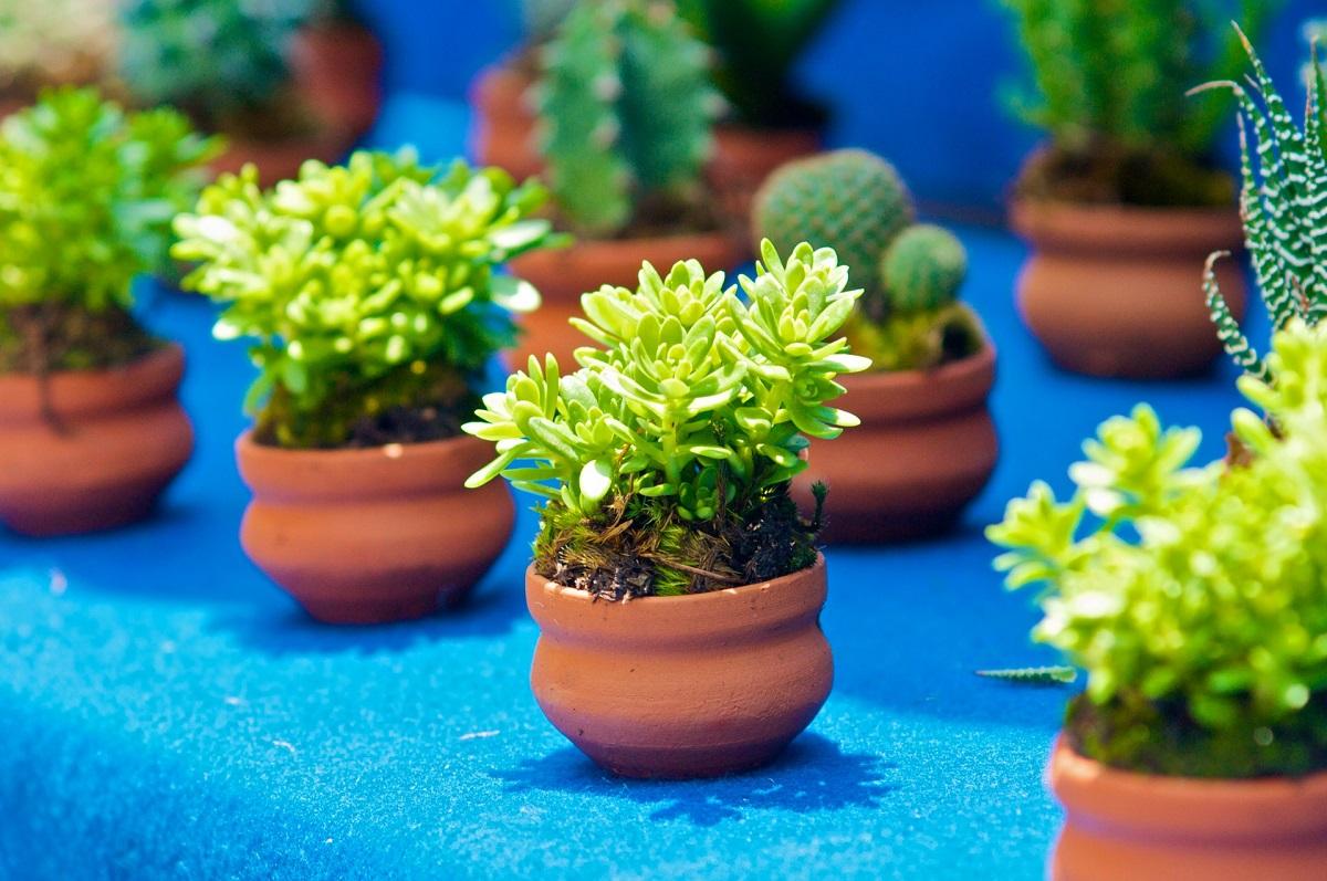 Macetas para jardines pequeños